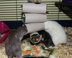 In this article, we will ask why pet rats need toys and discover the massive benefits that they can bring. We'll check out the ways that toys can enrich and cha Diy Mouse Toys, Diy Rat Toys, Rat Cage Diy, Pet Rat Cages, Rat Cage Accessories, Rat Care, Mouse Cage, Rat Hammock, Cute Rats