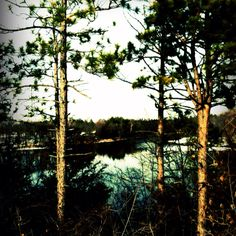 Beautiful view of the river at the park by our house Took and edited myself :)