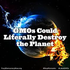 """Nassim Taleb, a renowned New York University (NYU) professor recently raised eyebrows when he said genetically modified organisms (GMOs) have the potential to cause """"an irreversible termination of life at some scale, which could be the planet."""" More here: http://ecowatch.com/2014/03/06/nyu-gmos-destroy-planet #GMOs #MotherEarth #NonGMO"""