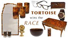 trending: Tortoise Wins the Race | Sarah Glynn Design