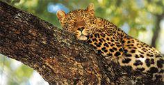 """Die Naturschätze im Sabi Sand Wildschutzgebiet in Südafrika kombiniert mit den tosenden Victoria Wasserfällen in Sambia. Sie wohnen im Sabi Sand Schutzgebiet in der """"Sabi Sabi Earth Lodge"""" und an den Victoria Fällen im stilvollen """"Royal Livingstone Hotel"""". Das Sabi Sand Wildschutzgebiet ist bekannt für seinen Wildreichtum und insbesondere die spannenden Raubkatzenbeobachtungen. Ausgezeichneter Service und herzliche afrikanische Gastfreundschaft. 6-tägige Flugsafari ab Johannesburg."""