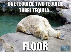 10 Best Polar Bear Memes Images Funny Animals Funny Images