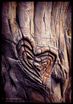 something about carving a heart and loving initials into an old tree, so beautiful, romantic and old fashioned. xo, who's initials will you carve in your Tree of Life. I Love Heart, With All My Heart, Happy Heart, Your Heart, Humble Heart, Small Heart, Heart In Nature, Heart Art, Love You Forever