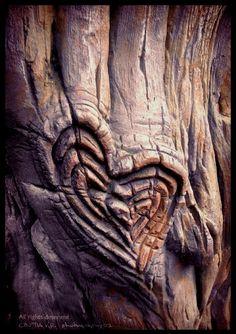 heart of the tree