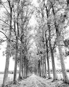 2015-10-05 #France #Normandie Comeback path #OneDayTrip #travel #trip #roadtrip #rally #wanderlust #fakation #landscape #countryside #trees #voyage #B&W #N&B #blackandwhite #bw #bnw #mono #nb #monochrome #blancoynegro #byn #bandw #noiretblanc #SchwarzWeiss #gaelic69 (à Château de Chambois)