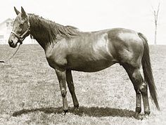 La Troienne (French, 1926-1954, by Teddy out of Helene de Troie) Arguably the most influential mare in American breeding. Winless in 7 starts, she was sold at Newmarket in 1930 to Col. Bradley of Idle Hour Farm in Lexington Ky. From 14 foals, she produced four stakes winners and became of the ancestress of countless top horses, including Buckpasser, Allez France, Easy Goer, Caerleon, Woodman, Mineshaft, Princess Rooney, Private Account, Smarty Jones, More Than Ready, Super Saver, and Sea…
