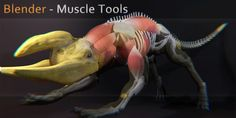 muscle tools