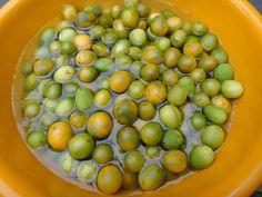 """VOCÊ CONHECE O UMBU? Umbu é uma fruta de polpa suculenta nativa da Caatinga,região de fortes secas. Do tupi-guarani """"y-mb-u"""", que significava """"árvore que dá de beber"""", a resistência à seca é a principal característica do umbuzeiro."""