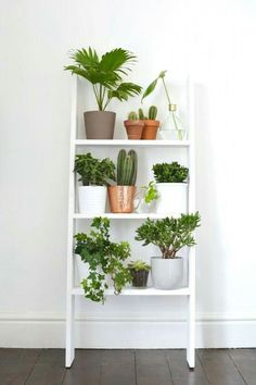Decorating Apartment Minimalist Shelves - Indoor Plant Ideas That& Instantly Breathe Life Into . Retro Home Decor, Diy Home Decor, Modern Decor, Home Decoration, Decorations For Home, Urban Home Decor, Modern Design, Green Decoration, Plantas Indoor