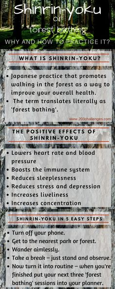 Shinrin Yoku - the Japanese tradition of forest bathing | 203Challenges