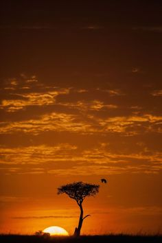 Paul Goldstein Photographs African Wildlife at Sunrise and Sunset