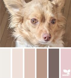 Hue Color, Colour Pallete, Color Combos, Design Seeds, Texture Design, Blog Design, Color Inspiration, Flora, Palette