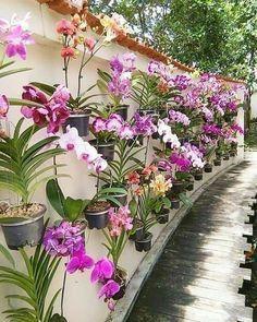 Backyard Plants, Small Backyard Landscaping, Landscaping Ideas, Diy Garden, Garden Projects, Best Potted Plants, Landscape Design, Garden Design, Growing Orchids
