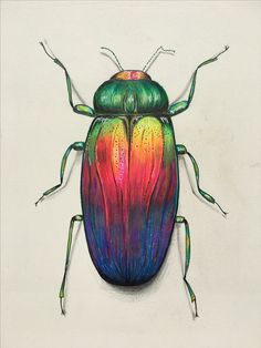 Colourful beetle pencil drawing prismacolor.