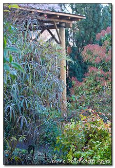 My Oregon Winter Garden