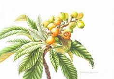 Related image Botanical Drawings, Botanical Art, Nature Study, Art Projects, Vintage, American, Plants, Expositions, Artists