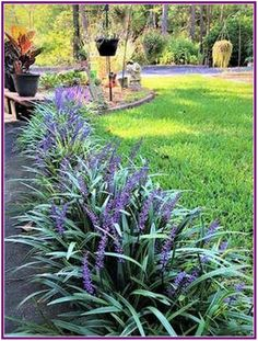 Monkey grass easy care plant maintenance garden landscaping front yards 25 Plants That Survive With or Without You Outdoor Landscaping, Outdoor Plants, Outdoor Gardens, Front Landscaping Ideas, Landscaping Plants, Natural Landscaping, Florida Landscaping, Backyard Plants, Landscaping Around Trees