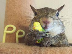 Wiewiórka-przyjęła-2