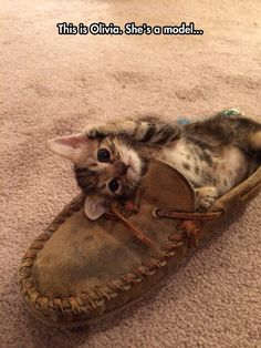 The Cutest Little Kitten
