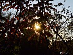 Una foto al sole è sempre un po' azzardata, la sua luce irrompe e brucia.