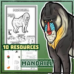 Mandrill -- 10 Resources -- Coloring Pages, Reading & Activities