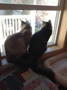 Peekaboo Sammy & Mimi