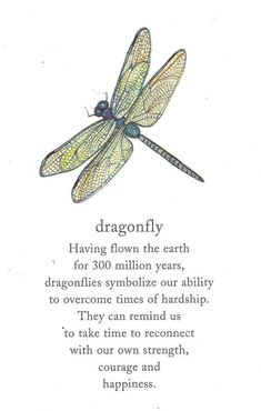 Dragonflies symbolize our ability to overcome times of hardship. They remind us to take time to reconnect with our own strength, courage, and happiness. I grew up loving dragonflies; when I learned what they symbolize, I appreciated them so much more.                                                                                                                                                      More