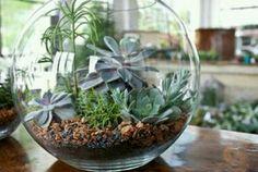 How to Make a Terrarium. I just love the look of terrariums. Terrarium Diy, Glass Terrarium, Terrarium Centerpiece, Green Centerpieces, Centerpiece Ideas, Glass Vase, Indoor Garden, Indoor Plants, Mini Mundo
