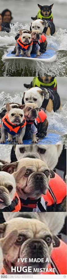 squee! A Frenchie, two bullies, and other assorted surfer pups.
