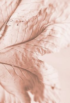 ❧ Couleur : Rose poudré ❧