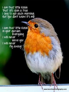 That little Robin.always by my side ❤️ Stay with me Robbie ❤️<br> Loss Quotes, Dad Quotes, Daughter Quotes, Family Quotes, Loved One In Heaven, Robin Redbreast, Miss You Dad, Grieving Quotes, Robin Bird