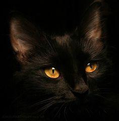 Black cat, amber eyes