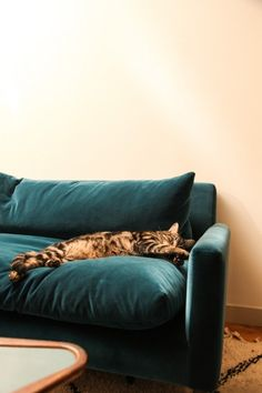 Home / Sofa / Cat / BIGCAT / Karine Duprez & Giovanni Guida / Colors