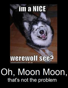 Dang nab bit Moon Moon, why cant he see that hes to silly to be a werewolf Funny Animal Pictures, Funny Animals, Cute Animals, Funny Cute, The Funny, Hilarious, Funny Dog Memes, Funny Dogs, Husky