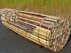 Designer faz projeto de um ecológico banco de bambu