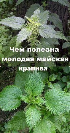 Interesting Information, Health, Garden, Food, Plant, Medicinal Plants, Garten, Meal, Health Care