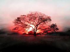 UPaP Copyright from Mora : Drzewo - charakterystyka na podstawie starotestame...