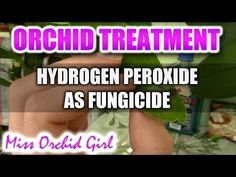 Using hydrogen peroxide with Orchids - Non toxic fungicide - YouTube