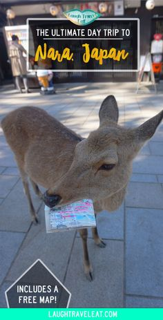 If you are in Kansai region a day trip to Nara to see the deer park and temples are a must. Here is an itinerary for food temples deers. Japan Travel Tips, China Travel, Nara, Deer Park, Hiroshima, Travel Alone, Travel Inspiration, Travel Ideas, Day Trip