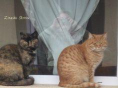 Zinnaida : Figaro și Suzana lui ! Pets, Friends, Animals, Amigos, Animales, Animaux, Animal, Animais, Boyfriends