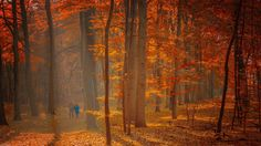 On a golden autumn day. #eloquent creations