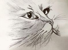 #art #dibujoconpluma #cat #drawing