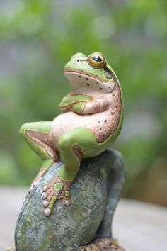A really laid back frog - Pixdaus . He hasn't the Frogiest  idea what's going on
