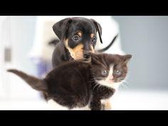 cani e gatti si incontrano per la prima volta,cosa accadrà?