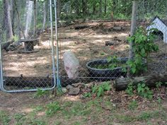Pot belly pig Pot Belly Pigs, Garden Hose, Pets, Board, Planks, Animals And Pets