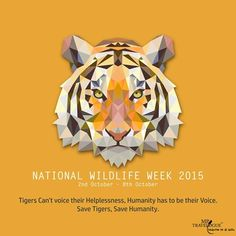 Save Tigers, save Humanity! WildLife Week |MPTravelogue|