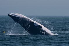 Quoddy Link Marine - Sightings and Updates: What a great day