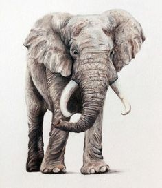 Colored Pencil Drawing of an Elephant