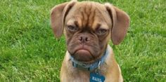 Grumpy Cat Has NOTHING on This Grumpy Dog  - CountryLiving.com