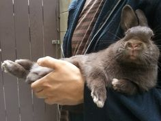 Wish my bunny would let me carry him around like this!